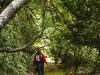 forest walk near Ardgour Inn