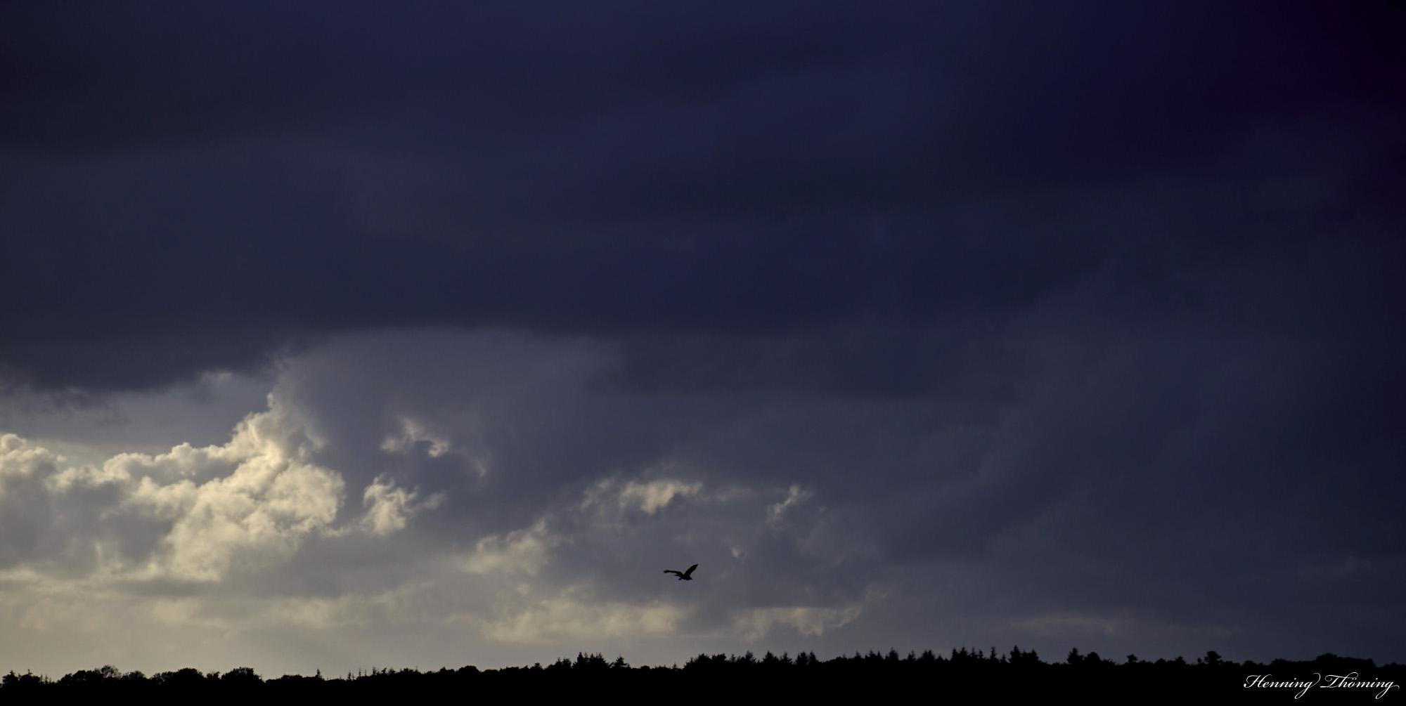 storm flyer