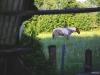 nordische Graslandzebras!