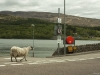 taking the ferry to Fort William