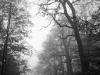 Wer hat Angst im dunklen, nebligen Wald?
