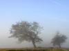 .... aus dem Nebel