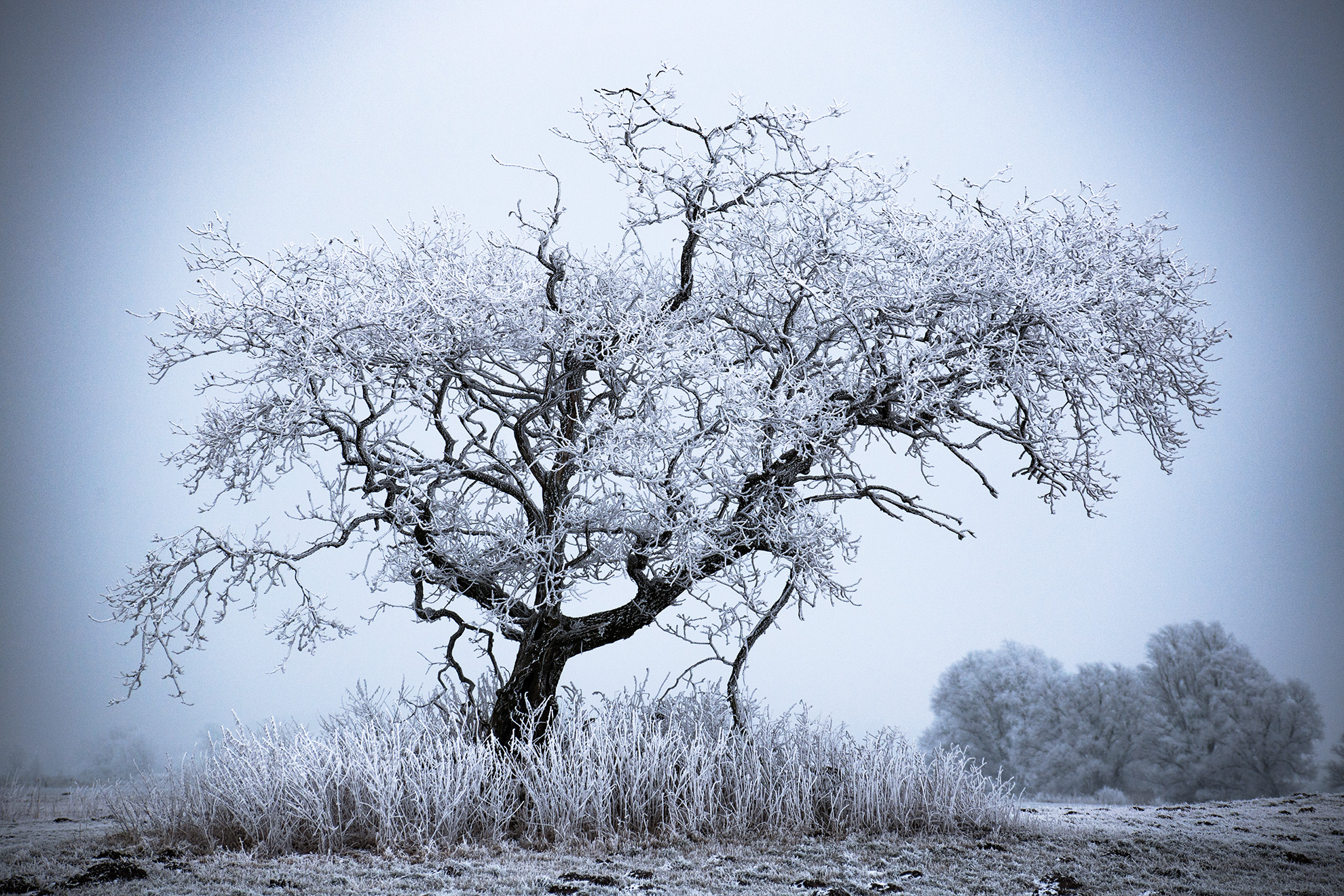 ghost tree chasing winter